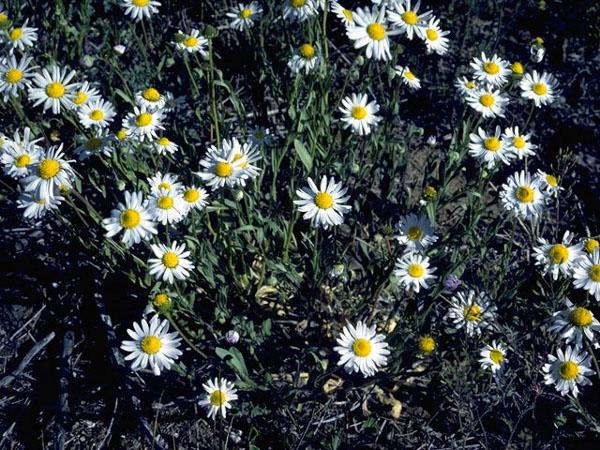 Ogrody | Kwiaty | Owoce | Warzywa